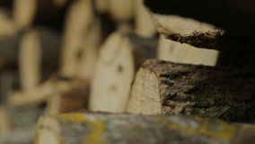 Refocusing on the pile felled tree trunk. Refocusing shot on the pile felled tree trunk stock video