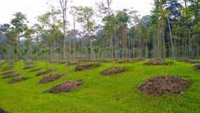 Reforestation stock images