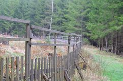 Reforestation, South Bohemia Royalty Free Stock Photos