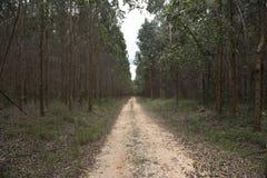 Reforestation Stock Image