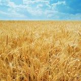 refoule le blé images libres de droits