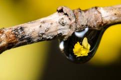 Refração da gota da água Fotografia de Stock Royalty Free