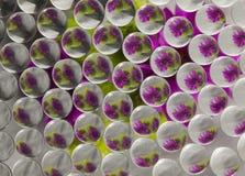 REFRACÇÃO 8 DAS FLORES Imagem de Stock Royalty Free