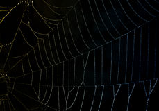 Refracted Light on a Dewy Spider Web Stock Photos