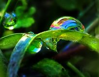 Refraction of Light. Raindrop, green, fresh, illuminate, low angle view, rainbow, wet, water, earth Royalty Free Stock Image