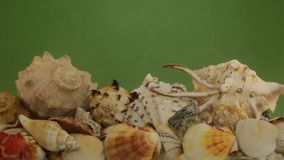 Refraction of sun rays through water on seashells in green water. stock footage
