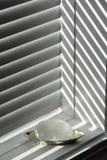 Gypsum spar in the sun stock photos