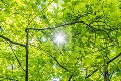 Refraktion av solljus i träden, naturlig plats royaltyfri foto