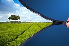 Refrescar sceen da plantação de chá verde com o fecho de correr aberto que conceptRefreshing sceen da plantação de chá verde com  imagens de stock royalty free