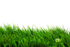 Refresh Grass on White background Royalty Free Stock Images