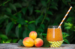 Refreshing apricot smoothies and ripe apricots in the summer garden. Summer fruits and drinks. Seasonal concept. Copy space royalty free stock photo