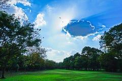 Refreshing. Background sky park grass Royalty Free Stock Photo