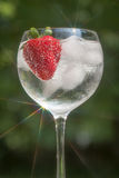 Refreshing Beverage Royalty Free Stock Photography