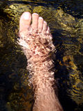 Refreshing foot. In the cold water of a stream Royalty Free Stock Photography