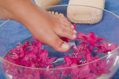 Refreshing footbath. Woman dipping her foot into a water bowl with pink blossoms Royalty Free Stock Image