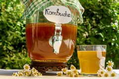 Refreshing kombucha tea with a medical camomile in old vintage bottle and glass, with label written kombucha on it on backdrop of stock photography