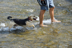 Refreshing walk in river in hot sommer. With dog stock photos