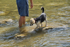 Refreshing walk in river in hot sommer. With dog Stock Photography