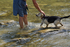 Refreshing walk in river in hot sommer. With dog royalty free stock photos
