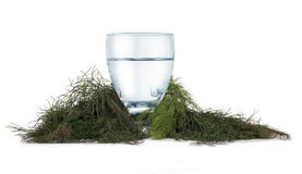 Refreshing water and herbs. Isolated water with herbs around Stock Photos