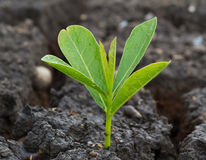 Refreshing young plant Royalty Free Stock Photography