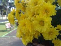 Refresing κίτρινο στοκ εικόνα