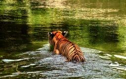 Refresing selbst durch das Gehen in den Teich stockfotografie