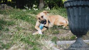 Refresque el perro en el parque que sostiene una botella de patas y mastica el cuello Momento fresco almacen de metraje de vídeo