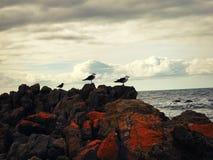 Refrigeração dos pássaros Fotos de Stock Royalty Free