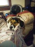 Refrigeración de cobre del perro bajo cubiertas imagen de archivo