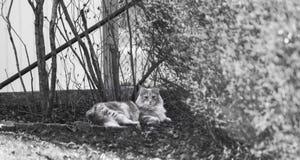 Refrigeración del gatito Imágenes de archivo libres de regalías