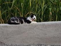 Refrigeración del gato foto de archivo