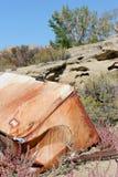 Refrigerador abandonado Imagen de archivo libre de regalías