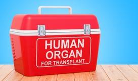 Refrigerador portátil para transportar os órgãos fornecedores no tabl de madeira ilustração royalty free