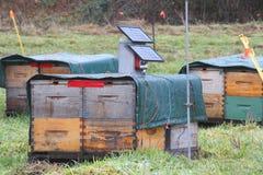 Refrigerador solar de la colmena de la abeja Imagenes de archivo