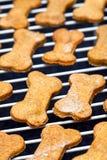 Refrigerar cozido caseiro dos biscoitos de cão Fotografia de Stock