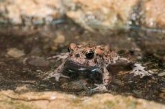 Refroidissement avec monsieur grenouille photographie stock libre de droits