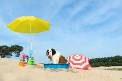 Refroidissement pour le chien à la plage Photographie stock
