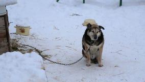 Refuge pour animaux, chiens attendant leurs nouveaux propriétaires clips vidéos