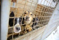 Refuge pour animaux Maison d'embarquement pour des chiens Photographie stock libre de droits