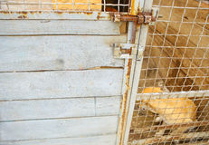 Refuge pour animaux Maison d'embarquement pour des chiens Image stock