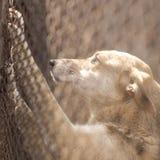 Refuge pour animaux Maison d'embarquement pour des chiens Photo libre de droits
