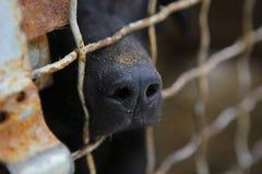 Refuge pour animaux Maison d'embarquement pour des chiens Image libre de droits