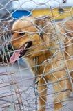 Refuge pour animaux Maison d'embarquement pour des chiens Images libres de droits