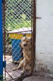 Refuge pour animaux Maison d'embarquement pour des chiens Photos libres de droits