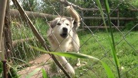 Refuge pour animaux sans abri extérieur Abri heureux de visiteur de chien métis triste banque de vidéos