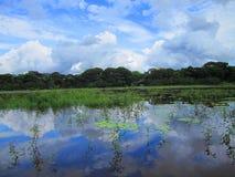 Refuge sauvage Costa Rica de la vie de nègre de Caño image stock