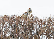 Refugio de la pequeña familia de pájaros indefensa del gorrión Imagenes de archivo
