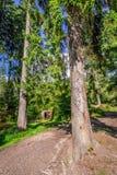 Refugio de madera en el bosque de la montaña Foto de archivo libre de regalías