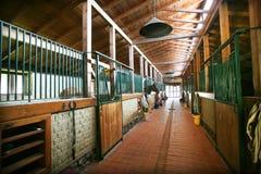 Refugio del caballo imágenes de archivo libres de regalías